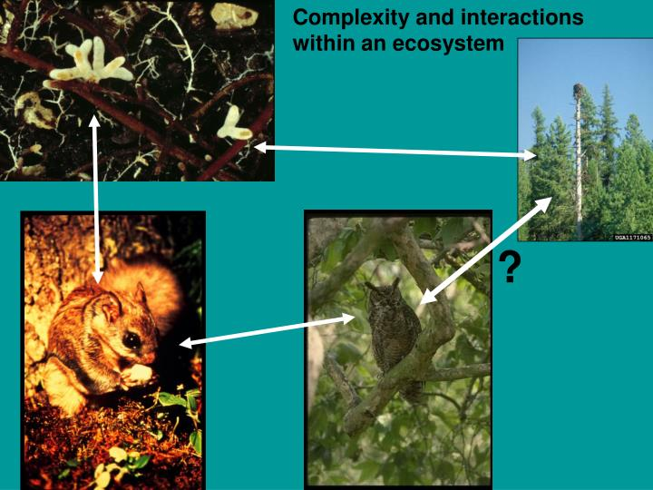 Complexity and interactions within an ecosystem