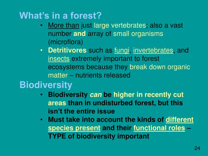 What's in a forest?