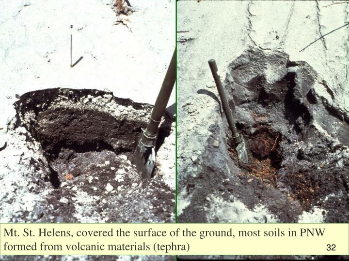 Mt. St. Helens, covered the surface of the ground, most soils in PNW formed from volcanic materials (tephra)