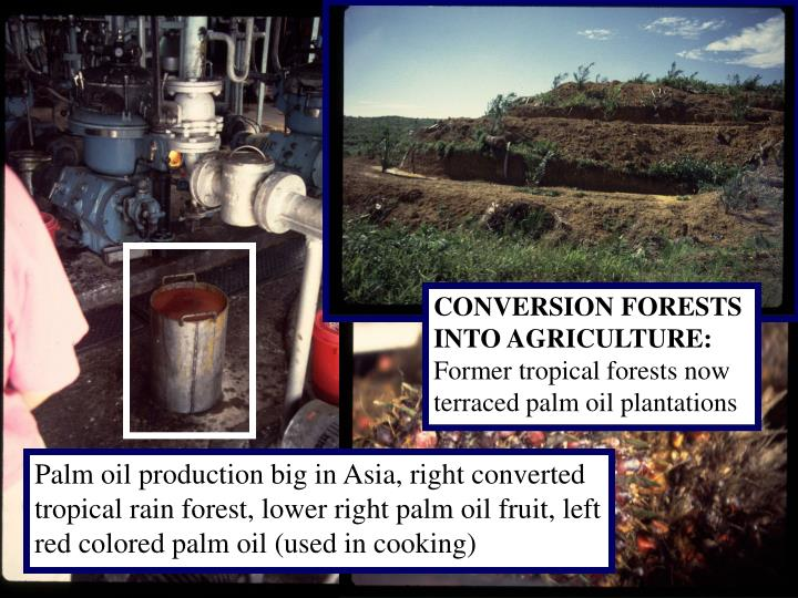 CONVERSION FORESTS INTO AGRICULTURE: