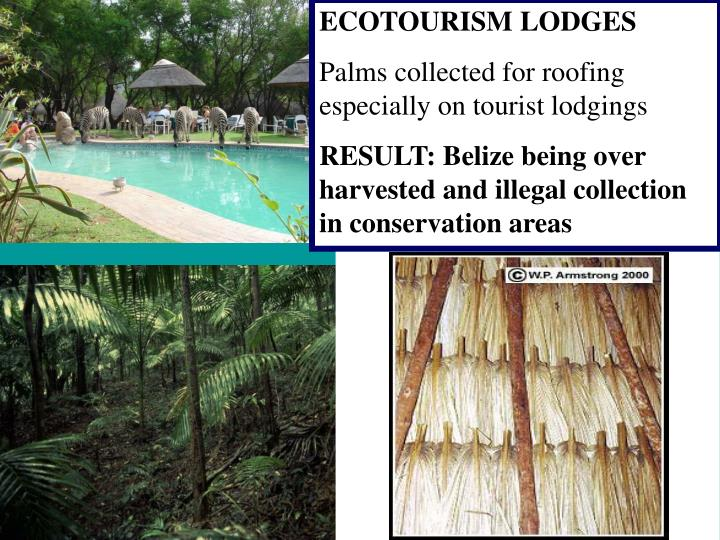 ECOTOURISM LODGES
