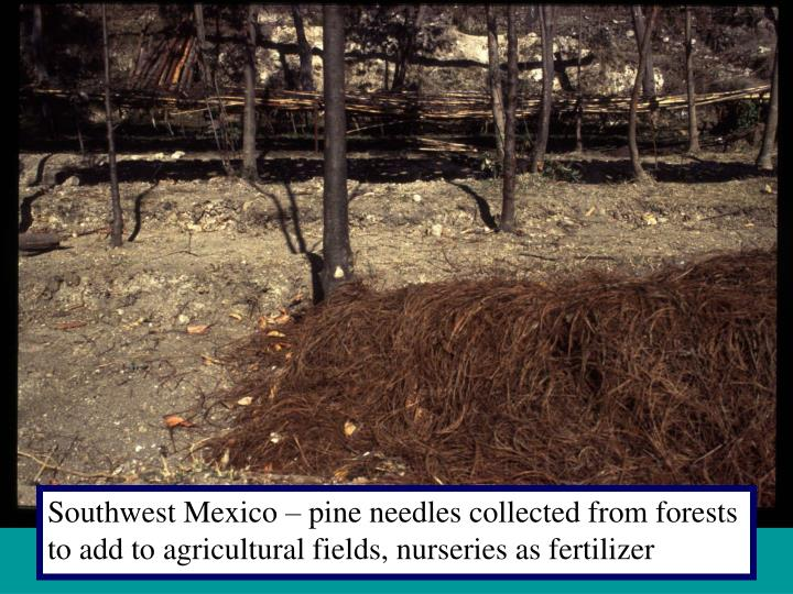 Southwest Mexico – pine needles collected from forests to add to agricultural fields, nurseries as fertilizer