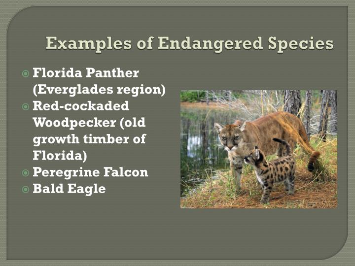 Examples of Endangered Species