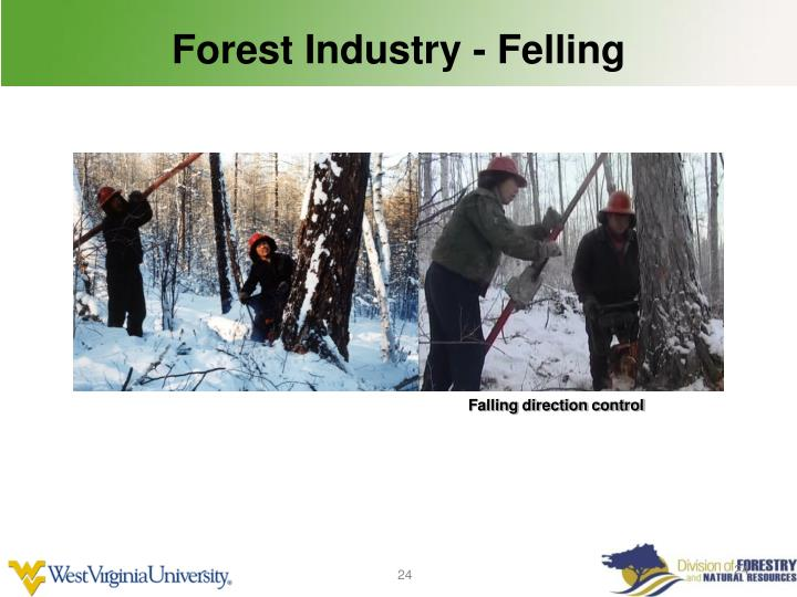 Forest Industry - Felling