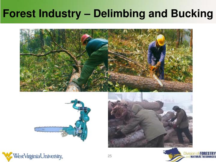 Forest Industry – Delimbing and Bucking