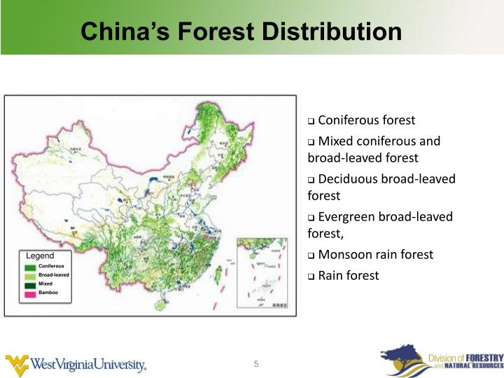 China's Forest Distribution