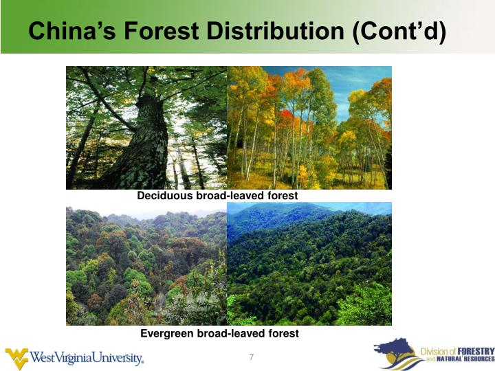China's Forest Distribution (Cont'd)
