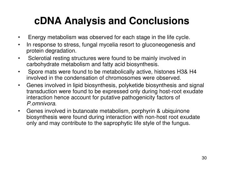 cDNA Analysis and Conclusions
