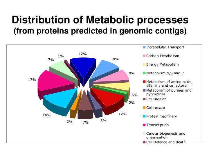 Distribution of Metabolic processes