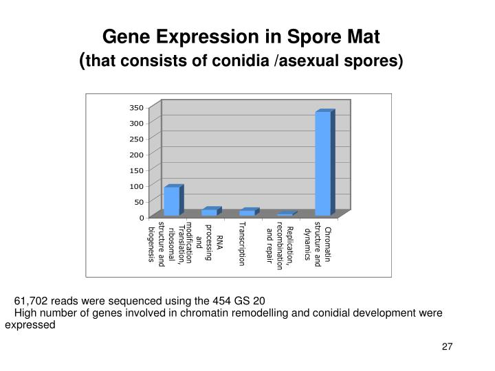 Gene Expression in Spore Mat