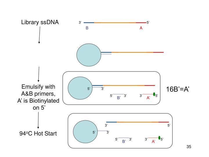 Library ssDNA
