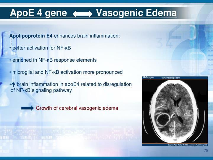 ApoE 4 gene           Vasogenic Edema
