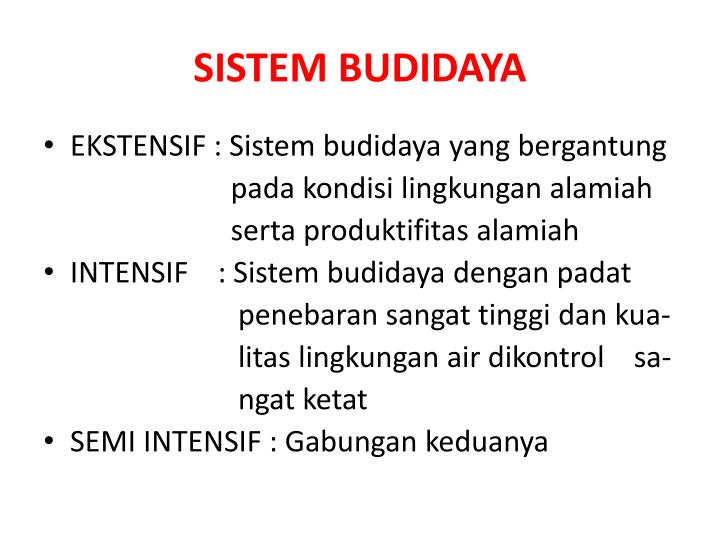 SISTEM BUDIDAYA