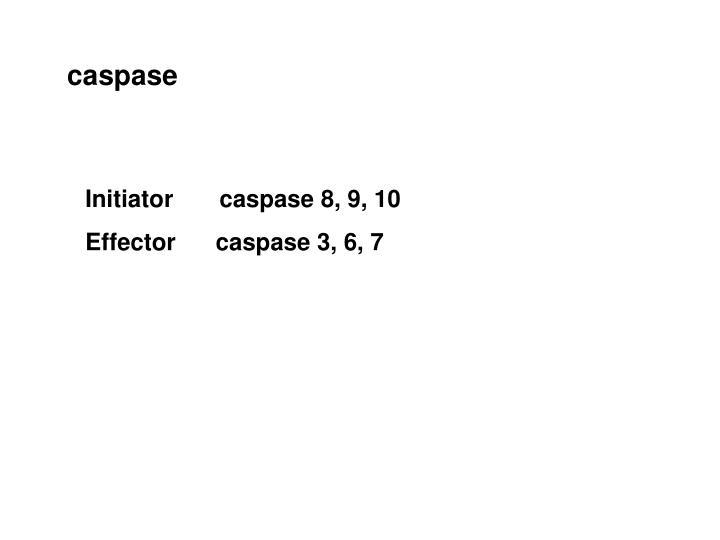 caspase