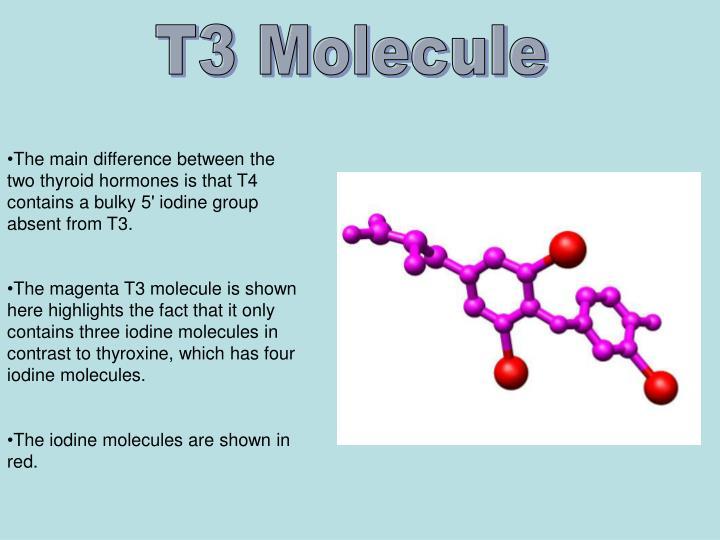 T3 Molecule