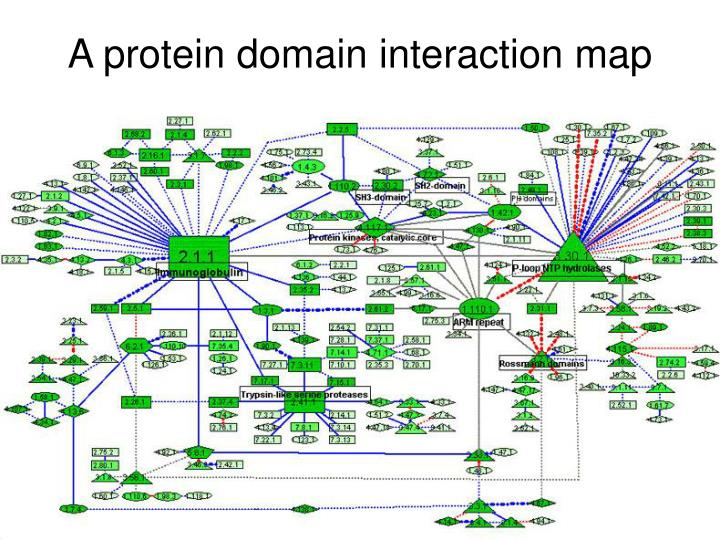 A protein domain interaction map
