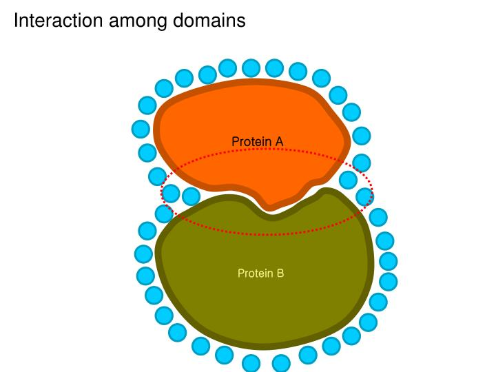 Protein A