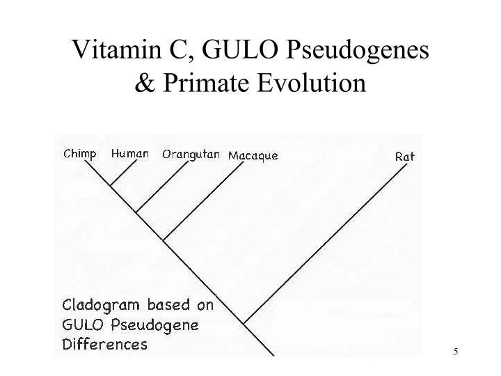 Vitamin C, GULO Pseudogenes
