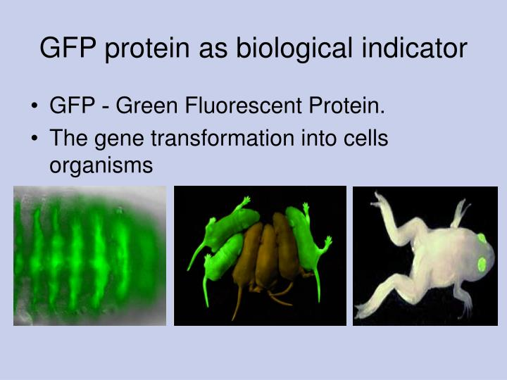 GFP protein as biological indicator