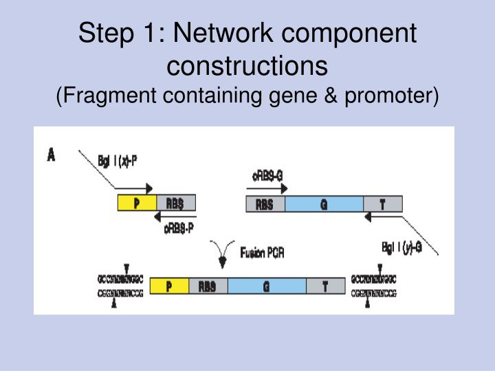 Step 1: Network component constructions