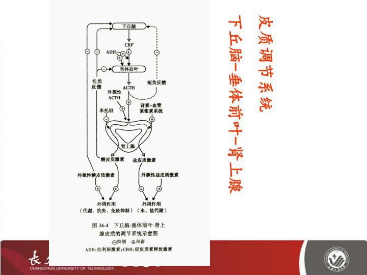 皮质调节系统