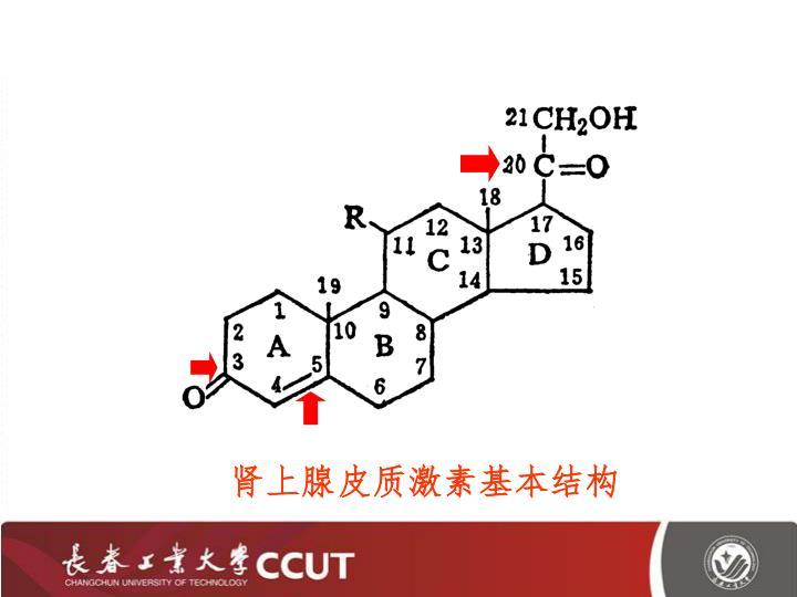 肾上腺皮质激素基本结构