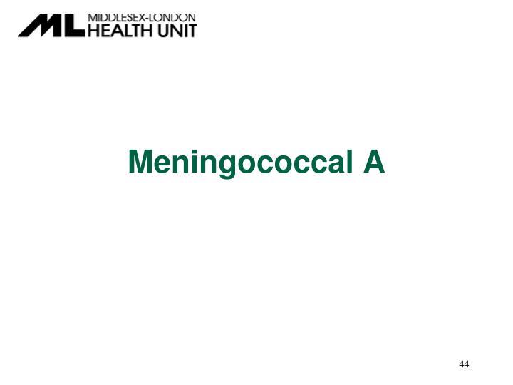 Meningococcal A
