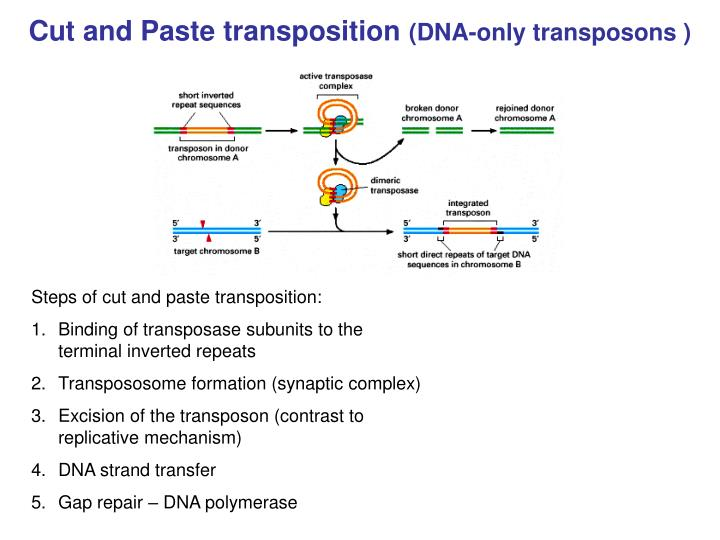 mechanisms of conservative and replicative transposition biology essay The usefulness of the technique for studying the mechanism of replicative transposition and the end products of a single round of replication are discussed full text get a printable copy (pdf file) of the complete article (971k), or click on a page image below to browse page by page.