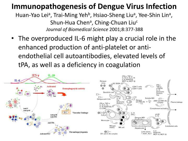Immunopathogenesis of Dengue Virus Infection