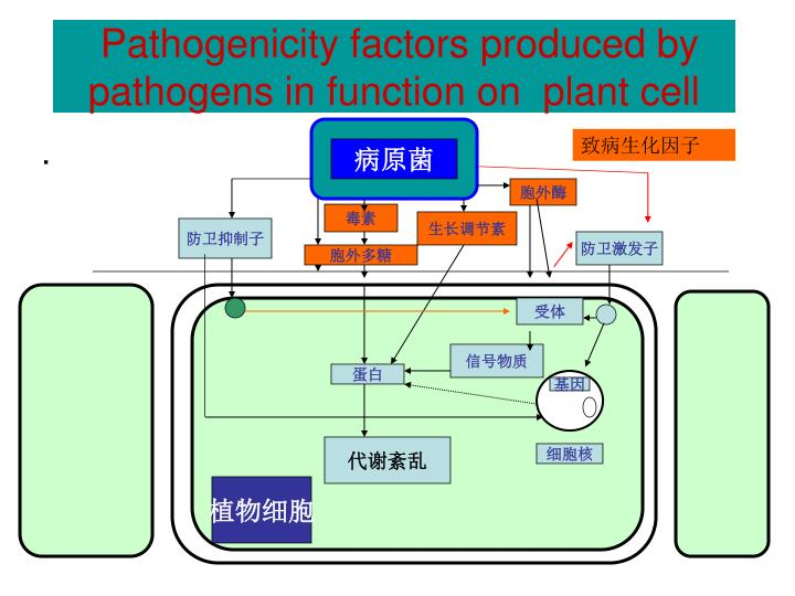 Pathogenicity factors produced by pathogens in function on  plant cell