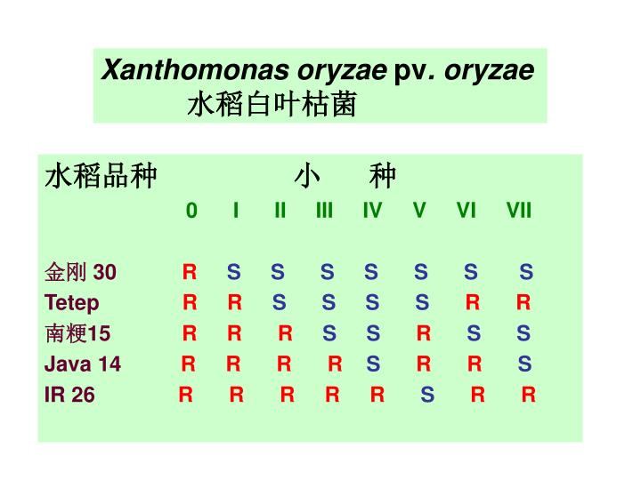 Xanthomonas oryzae