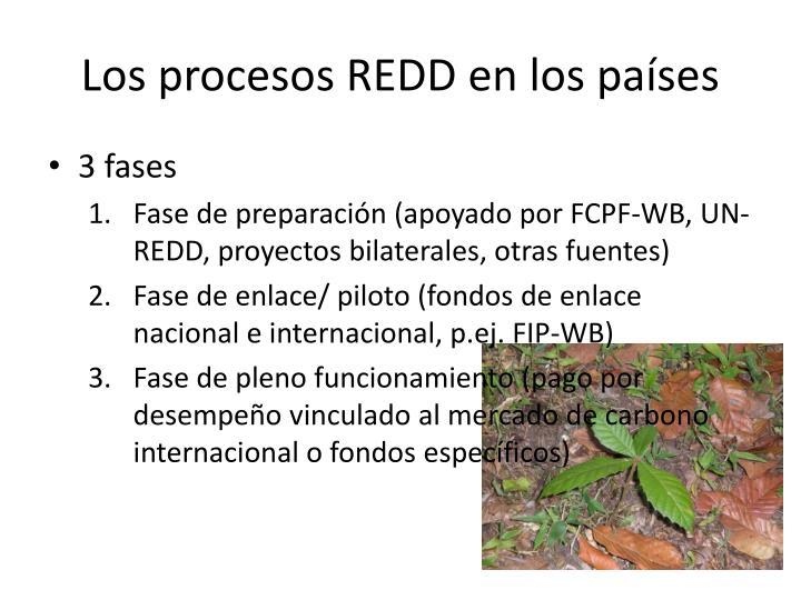 Los procesos REDD en los países