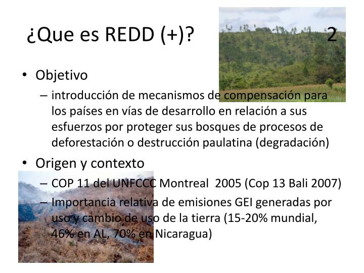 ¿Que es REDD (+)?                          2