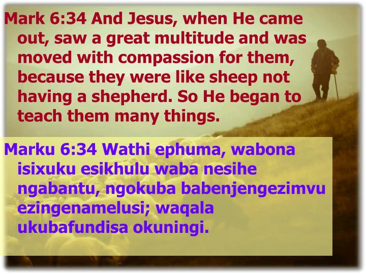 Mark 6:34 And Jesus, when He came out, saw a great multitude and was moved with compassion for them, because they were like sheep not having a shepherd. So He began to teach them many things.