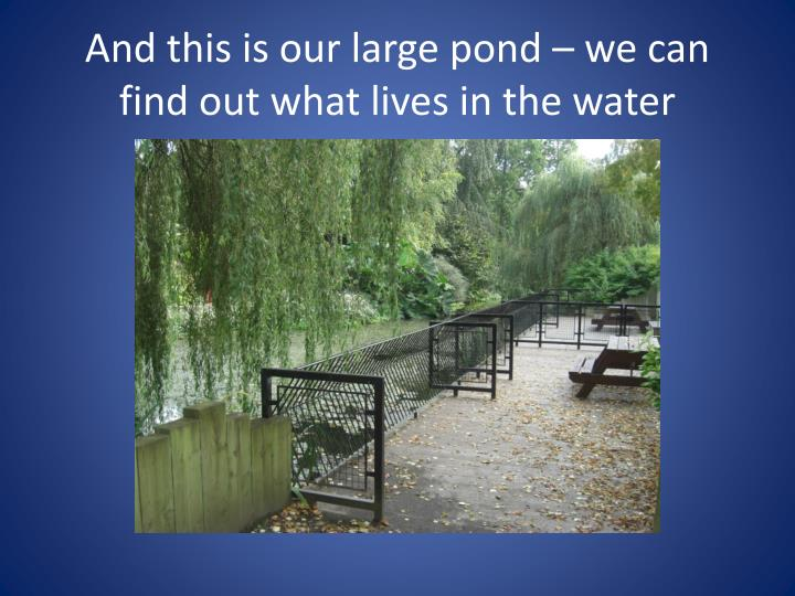 And this is our large pond – we can find out what lives in the water