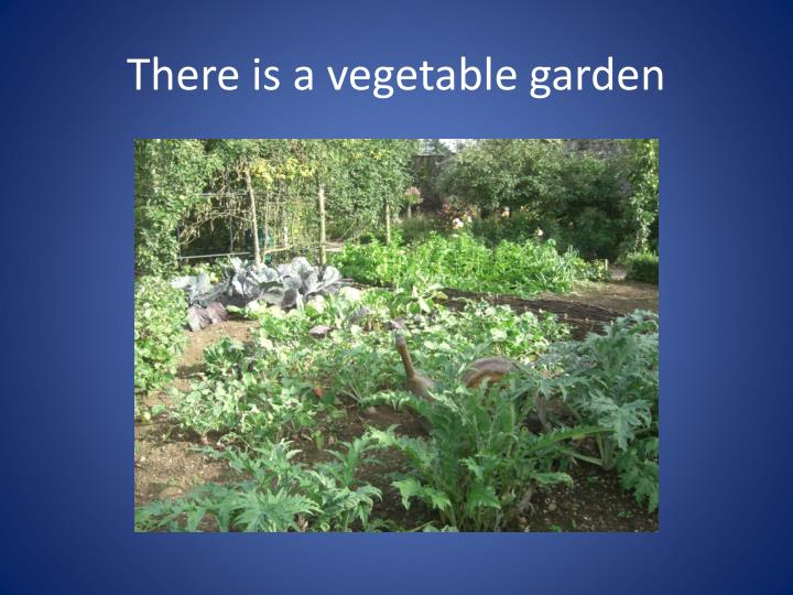 There is a vegetable garden