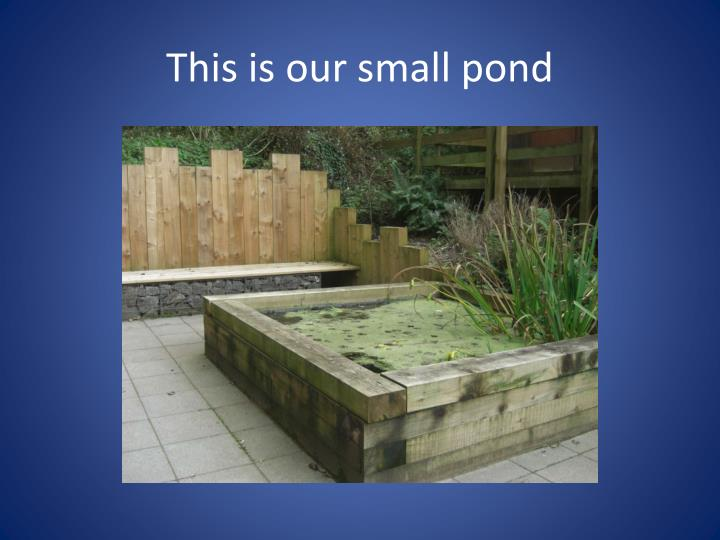 This is our small pond
