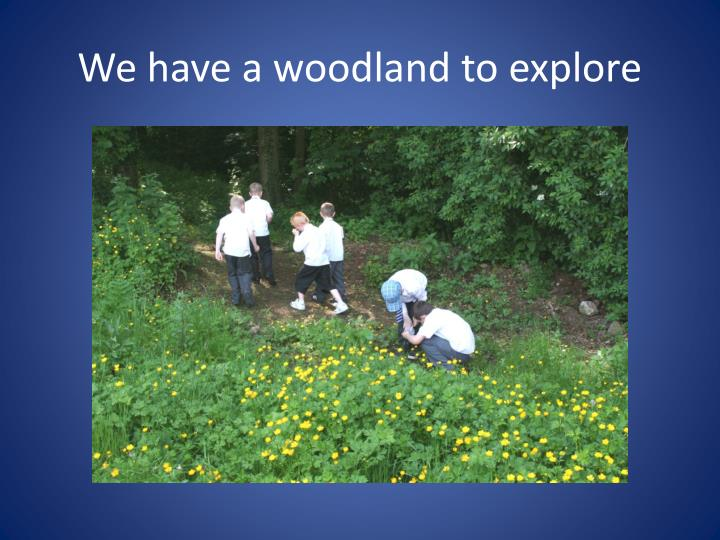 We have a woodland to explore