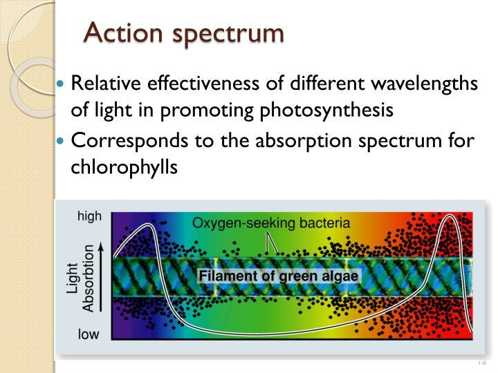 Action spectrum