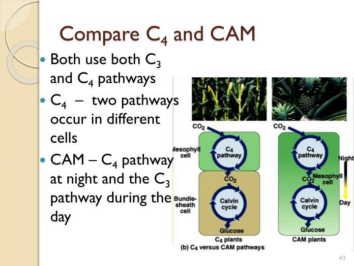 Compare C