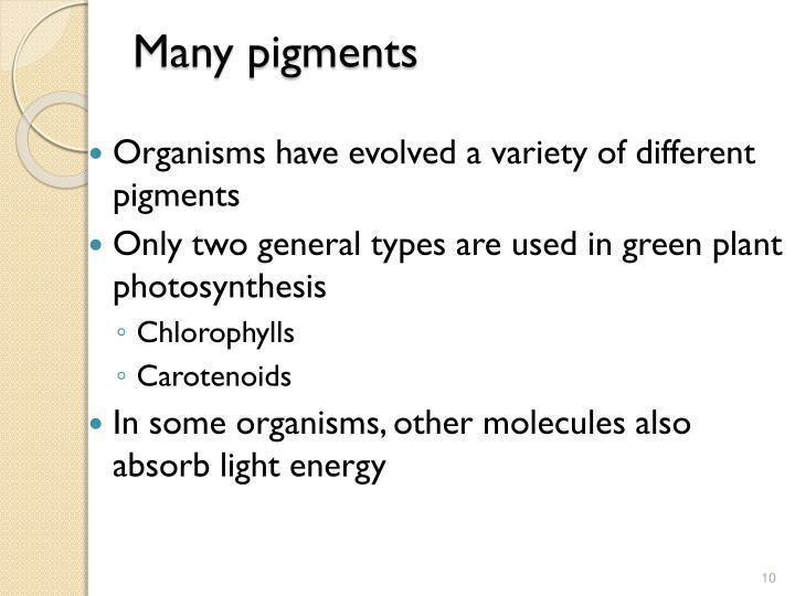 Many pigments
