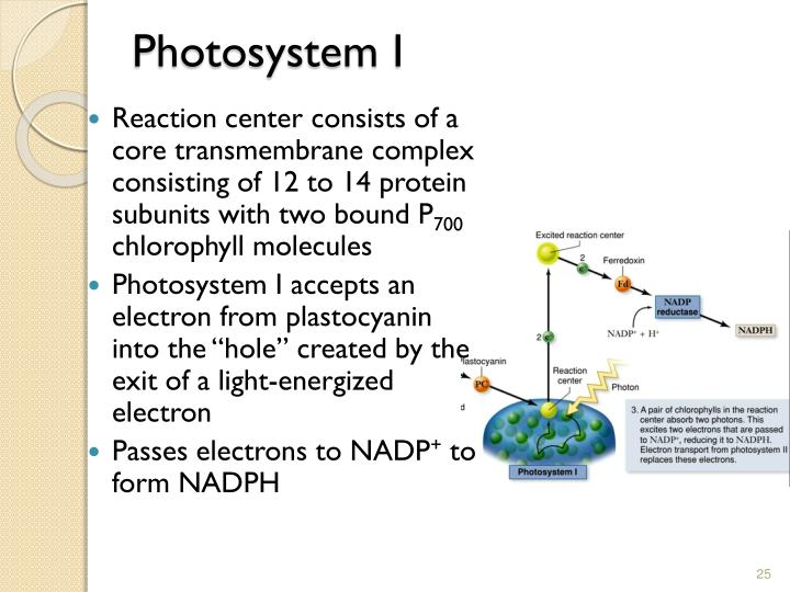 Photosystem
