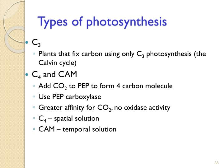 Types of photosynthesis
