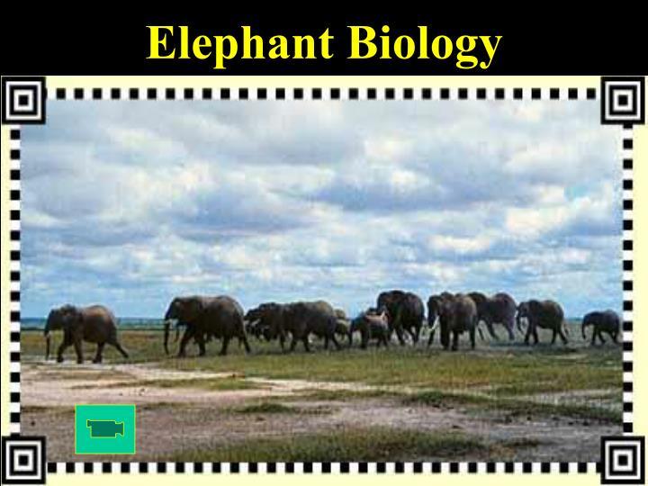 Elephant Biology