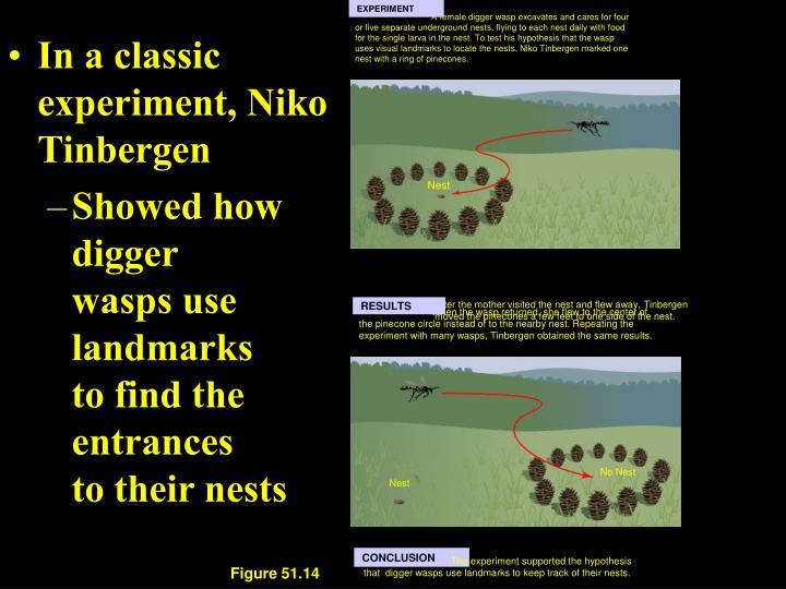 In a classic experiment, Niko Tinbergen