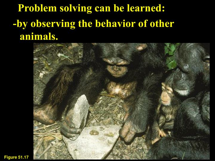 Problem solving can be learned: