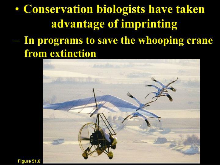 Conservation biologists have taken advantage of imprinting
