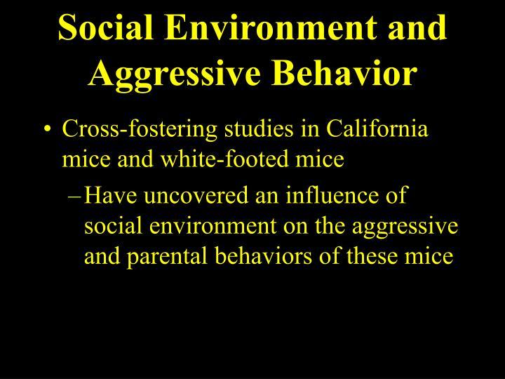 Social Environment and Aggressive Behavior