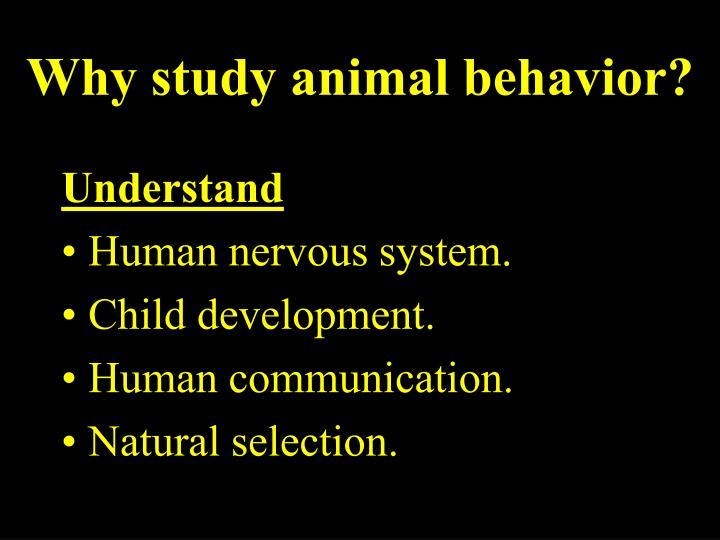 Why study animal behavior?