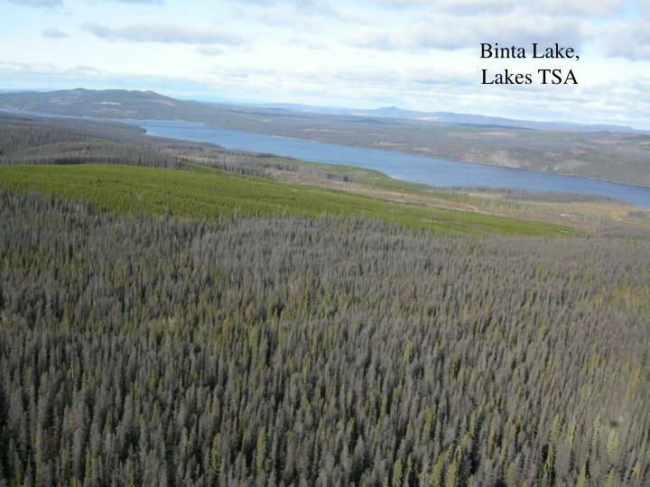 Binta Lake, Lakes TSA